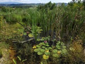 naravni ribnik